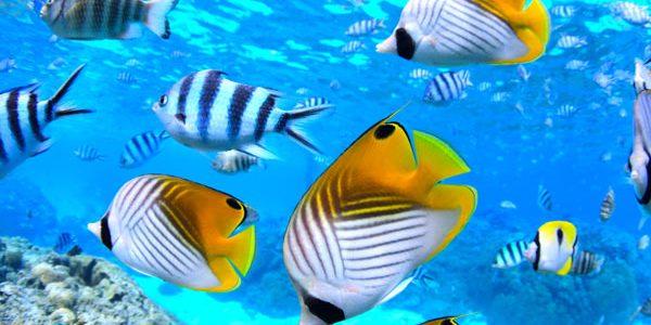 snorkeling-hotel-rangiroa
